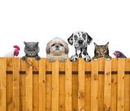 Os cães, os gatos, a galinha e o galo olham através de uma cerca Fotos de Stock Royalty Free