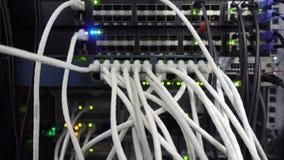 Os cabos de UTP são conectados a um interruptor de rede Atividade da rede no interruptor filme