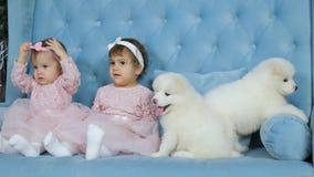 Os cachorrinhos macios brancos do ano novo dois e as irmãs gêmeas sentam-se no sofá azul na sessão fotográfica vídeos de arquivo
