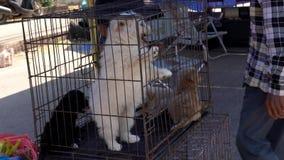 Os cachorrinhos vivos jogam em uma gaiola em um mercado vídeos de arquivo