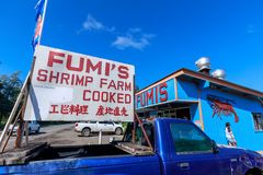 Os camarões do alho de Fumi compram na costa norte Oahu fotos de stock