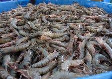 Os camarões frescos no mercado de produto fresco Imagem de Stock Royalty Free
