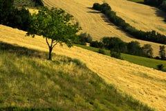 Os campos agrícolas cultivaram e araram com áreas de verde e de amarelo imagem de stock royalty free