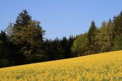 Os campos amarelos de Canola crescem a energia alternativa Fotos de Stock Royalty Free