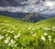 Os campos da flor florescem nas montanhas de Cáucaso Fotografia de Stock Royalty Free