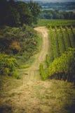 Os campos da uva em Toscânia, Itália Fotos de Stock