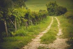 Os campos da uva em Toscânia, Itália Foto de Stock Royalty Free