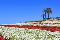 Os campos de flor imagens de stock