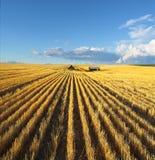 Os campos de Montana Foto de Stock Royalty Free