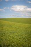 Os campos de trigo sob um verão nublam-se Fotografia de Stock Royalty Free