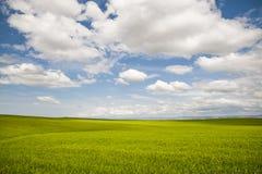 Os campos de trigo sob um verão nublam-se Imagens de Stock