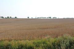 Os campos e as florestas do dia de Rep?blica Checa em agosto imagem de stock royalty free