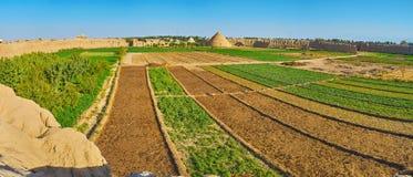 Os campos em Kashan velho, Irã imagem de stock
