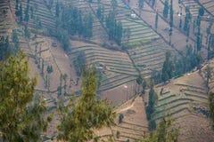 Os campos para vegetais crescentes nas inclinações Fotografia de Stock Royalty Free