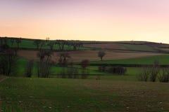 Os campos recentemente plantados começam a considerar o milho crescer no por do sol Foto de Stock
