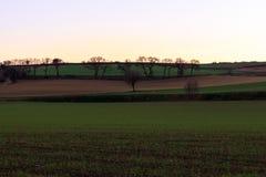 Os campos recentemente plantados começam a considerar o milho crescer no por do sol Fotos de Stock