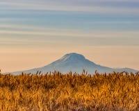 Os campos são maduros! Deixe a colheita começar Foto de Stock Royalty Free