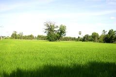 Os campos verdes do arroz da paisagem são bonitos Imagem de Stock Royalty Free