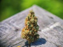 Os cannabis secados brotam a tensão congolesa sobre a textura de madeira - medica Imagem de Stock