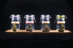 Os cannabis sortidos brotam tensões e os frascos de vidro - marijuana médica fotos de stock royalty free