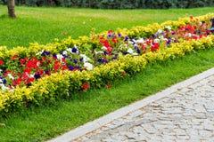 Os canteiros de flores decorativos com flores e os arbustos na paisagem estacionam imagens de stock
