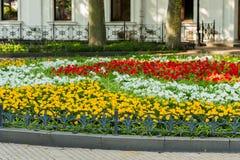 Os canteiros de flores decorativos com flores e os arbustos na paisagem estacionam fotos de stock