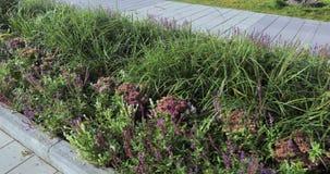 Os canteiros de flores e as árvores com os arbustos na cidade estacionam filme