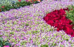 Os canteiros de flores no parque decoraram muitos tipos das flores nas explosões Fotografia de Stock