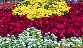 Os canteiros de flores no parque decoraram muitos tipos das flores nas explosões Imagens de Stock