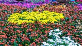 Os canteiros de flores no parque decoraram muitos tipos das flores nas explosões Fotos de Stock
