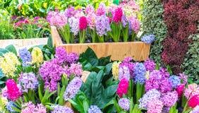 Os canteiros de flores no parque decoraram muitos tipos das flores nas explosões Fotos de Stock Royalty Free