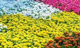 Os canteiros de flores no parque decoraram muitos tipos das flores nas explosões Imagem de Stock