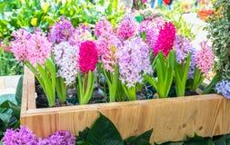 Os canteiros de flores no parque decoraram muitos tipos das flores nas explosões Foto de Stock Royalty Free