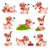 Os caráteres engraçados do terrier de russell do jaque ajustam-se, cão bonito em poses diferentes e as situações vector ilustraçõ ilustração royalty free