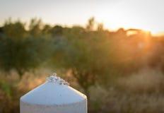 Os caracóis apreciam a luz do sol imagens de stock royalty free