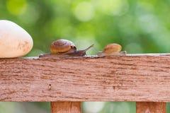 Os caracóis estão rastejando lentamente Foto de Stock