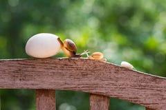 Os caracóis estão rastejando lentamente Foto de Stock Royalty Free