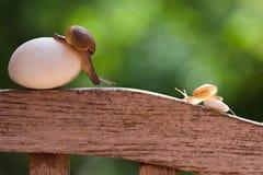 Os caracóis estão rastejando lentamente fotografia de stock