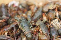 Os caranguejos do rio vivem Fotografia de Stock Royalty Free