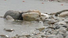 Os caranguejos sentam-se na pedra na praia com ondas de rolamento filme