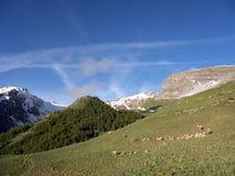 Os carneiros em Haute Provence estacionam o mercantour perto de colo de vars no prado ensolarado com as montanhas tampadas neve fotografia de stock royalty free