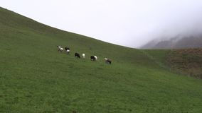Os carneiros pastam em prados da montanha, bavaria video estoque