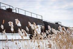 Os carros de tanque atrás de Frost cobriram Cattails Fotografia de Stock