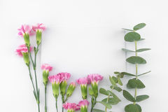 Os cartões brancos vazios decorados com eucalipto do bebê saem Imagem de Stock