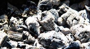 Os carvões queimaram-se após o fogo, árvore queimada foto de stock
