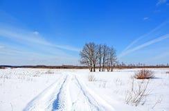 Os carvalhos aproximam o inverno da estrada imagem de stock royalty free