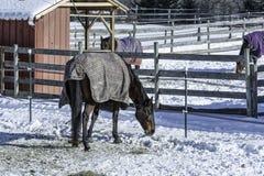Cerca do inverno Imagens de Stock