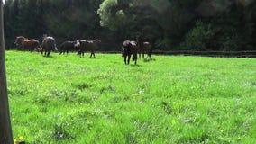Os cavalos correm livre no prado vídeos de arquivo