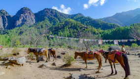 Os cavalos e a grama ajardinam com as montanhas verdes, Butão Fotos de Stock