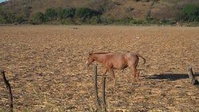 Os cavalos estão livres no campo cercado por montanhas na cidade mágica de Mascota Jalisco filme